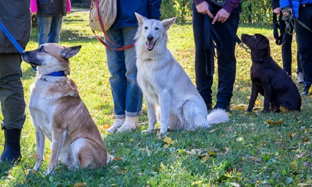 5 Common Myths About Electronic Dog Training Collars