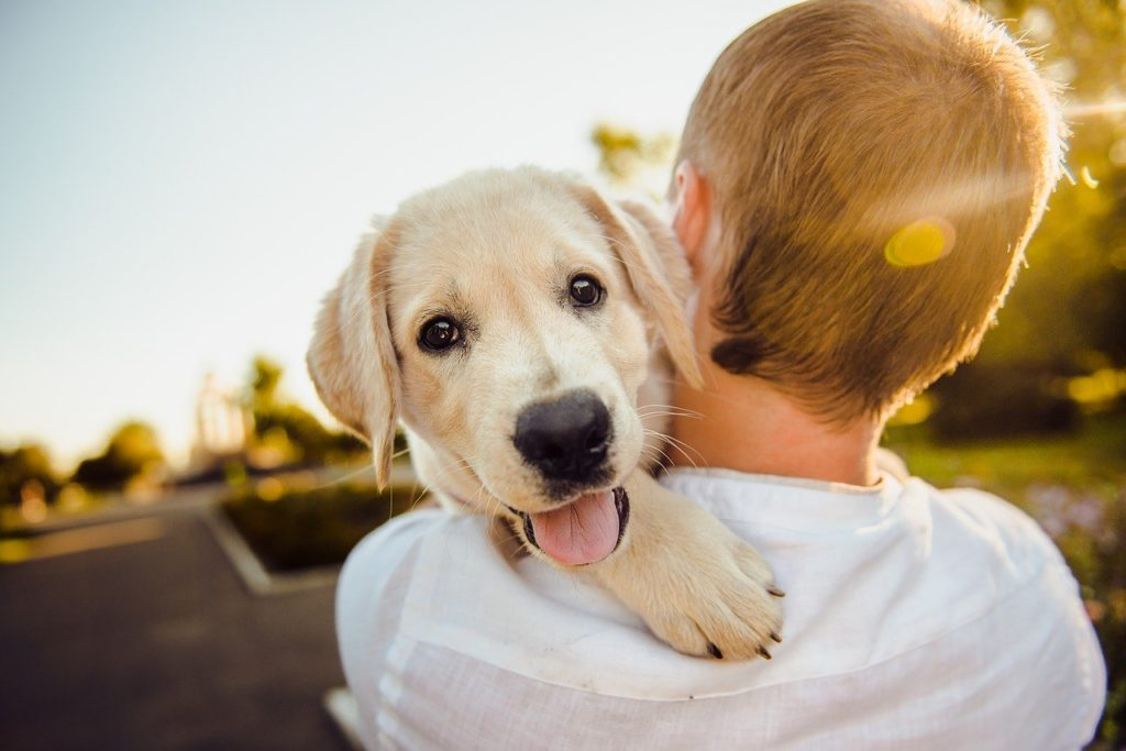 A happy dog on his owners shoulder