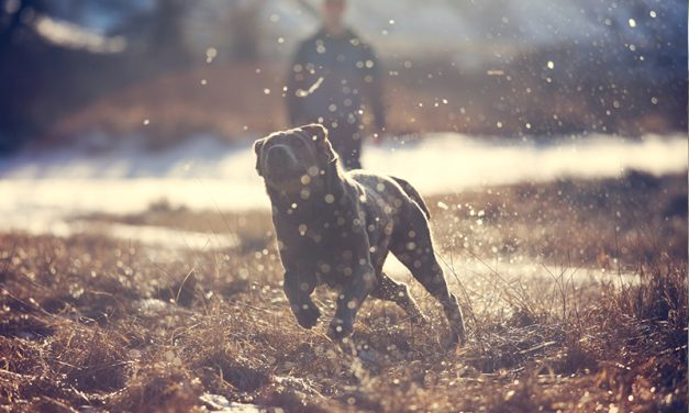 How to Stop Dog Chasing with an E Collar